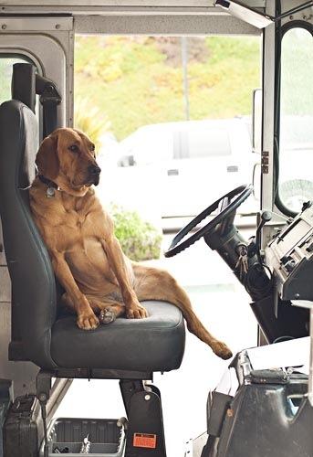 dog_driving.jpg